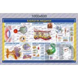"""БДМ4 Плакат """"Біологія людини - Будова шкіри, слухова, зорова, нервова системи та вестибулярний аналізатор"""" (1000*600мм) 1"""