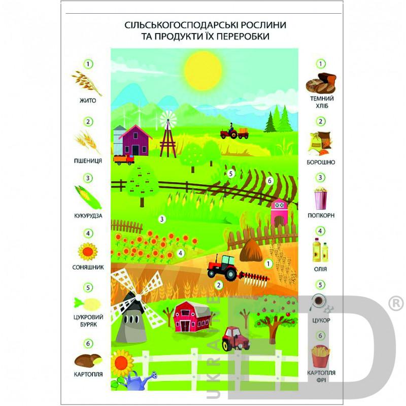 """Плакат """"Сільськогосподарські рослини та продукти їх переробки"""""""