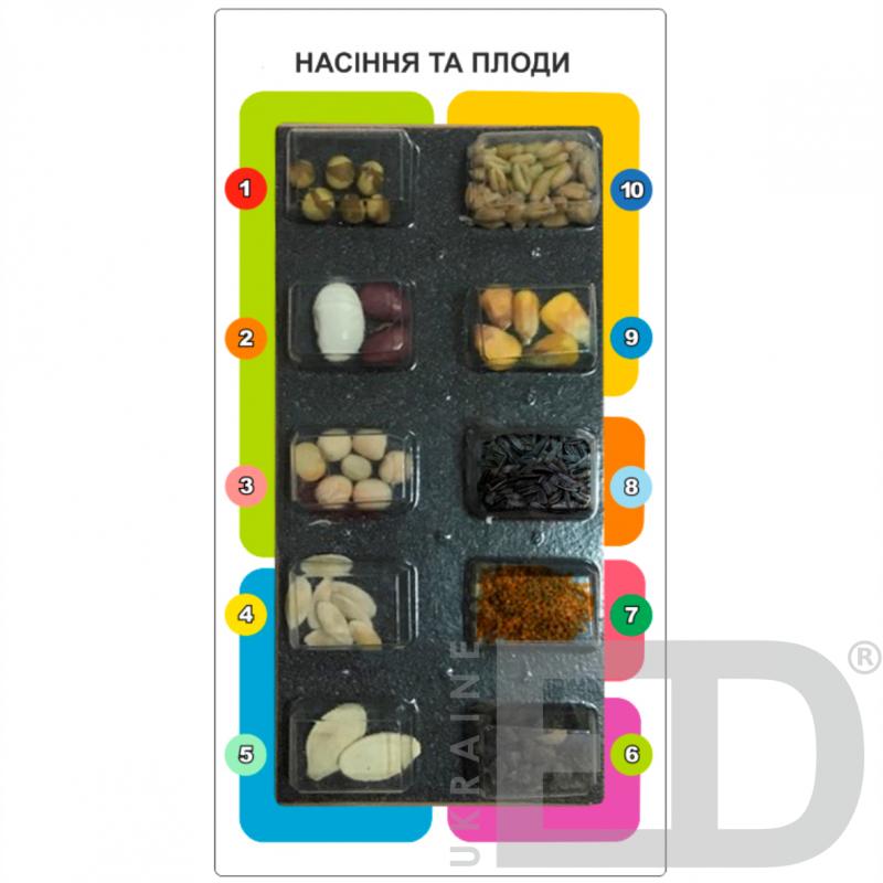 """Колекція """"Насіння та плоди"""" лабораторна"""