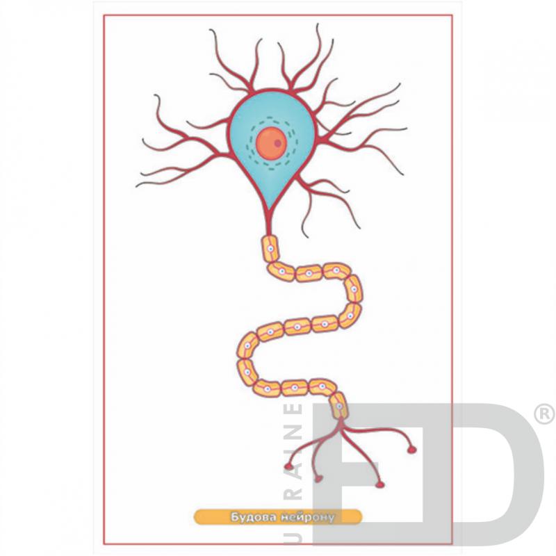 """Барельєфна модель """"Будова нейрона"""""""
