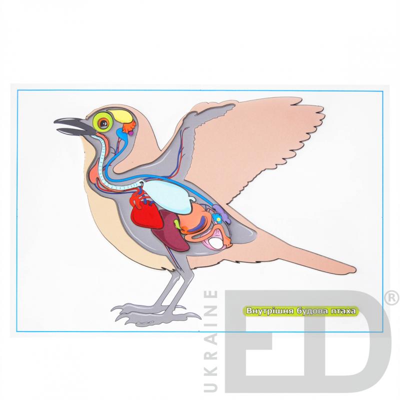 """Барельєфна модель """"Внутрішня будова птаха"""""""