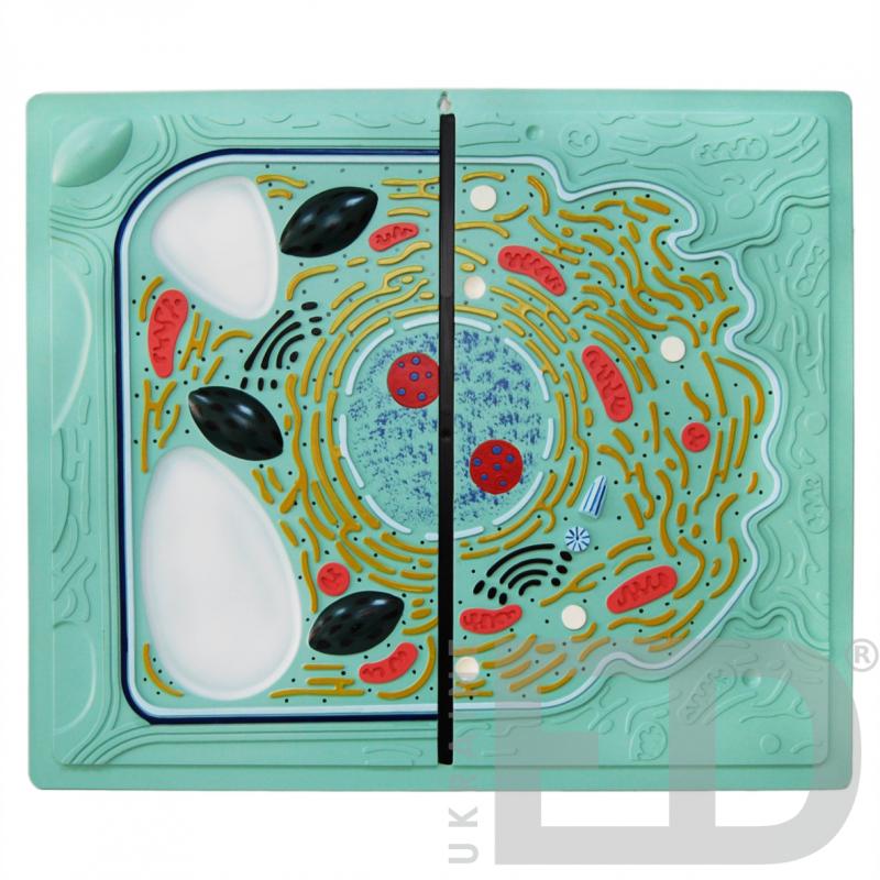 """Барельєфна модель """"Будова рослинної та тваринної клітин - порівняльна форма"""""""
