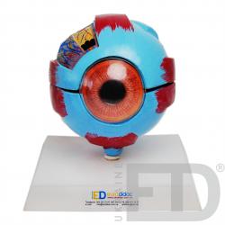 Модель ока
