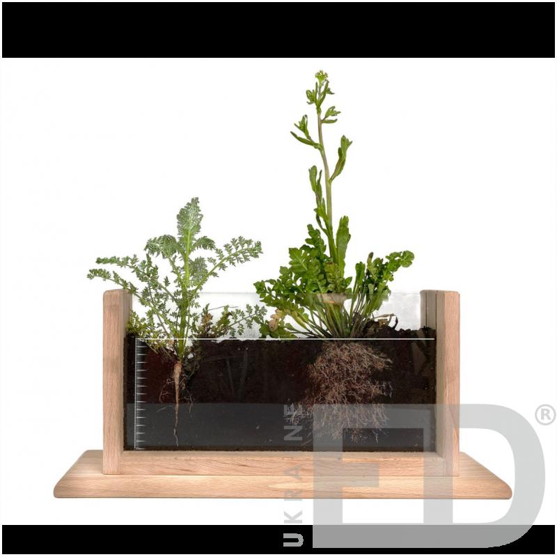 Набір для спостереження за розвитком і ростом рослин (Лабораторія для спостереження за рослинами)