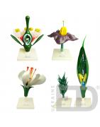 Ботаніка. Рослини - купити для оснащення кабінету біології